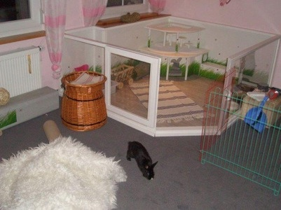 Bunny Housing Ideas Las Vegas House Rabbit Society