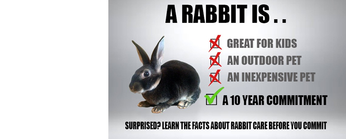 Is a Rabbit Right For Your Home?